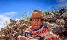 Bio Kaffee Bolivien online bestellen