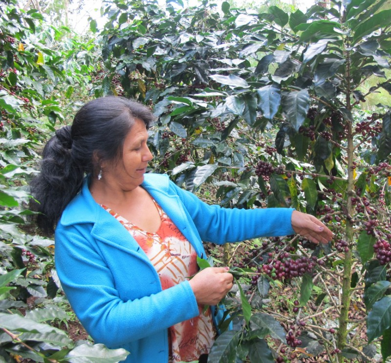 PachaMama Kaffee Peru Anbaugebiet