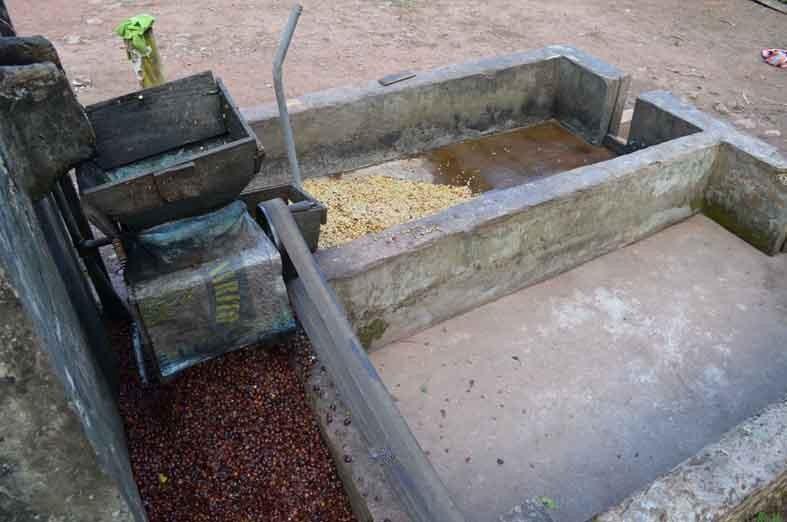 https://www.martermuehle.de/media/image/12/00/5e/Kaffeeaufbereitung-f-r-Kaffeepads-PachaMama-Peru.jpg