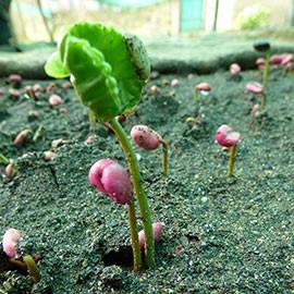 Bio Kaffee Peru Tunki online kaufen