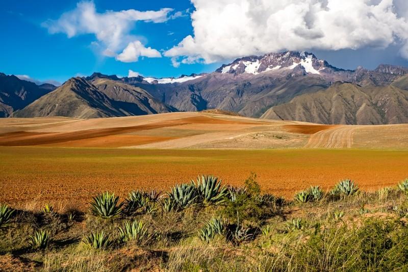 Bio Espresso Bolivien online bestellen