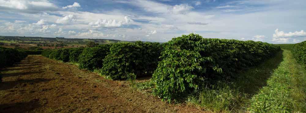 Plantage-Ismael-Brasilien