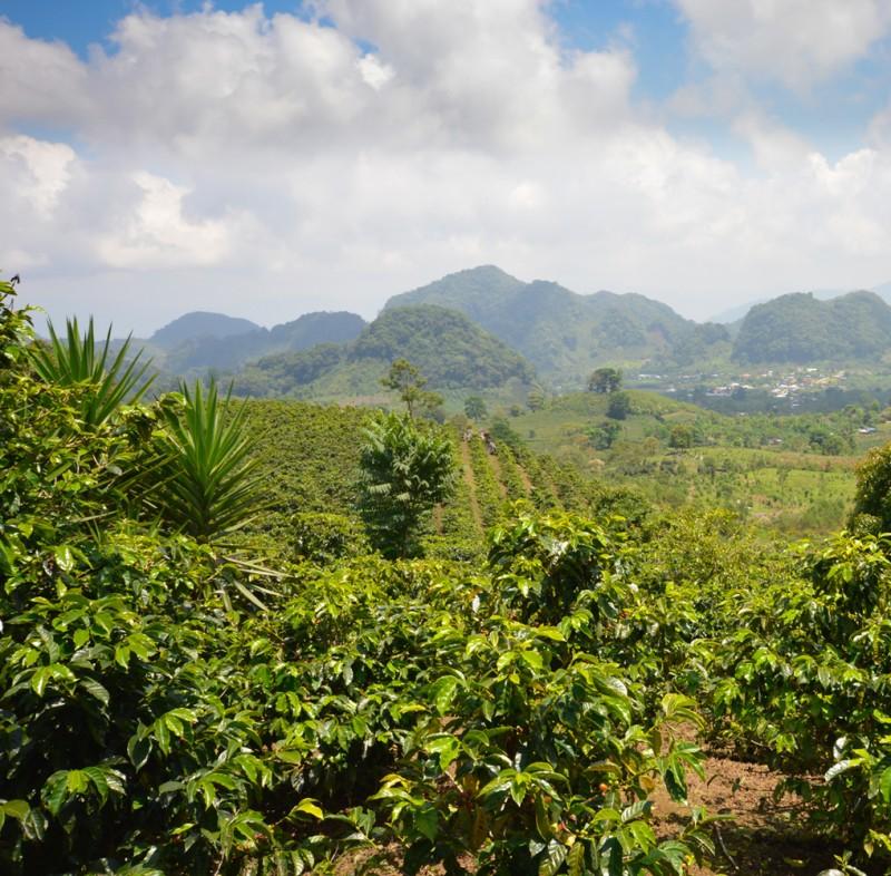 Bio Espresso Honduras online bestellen