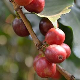 Bio Espresso online kaufen