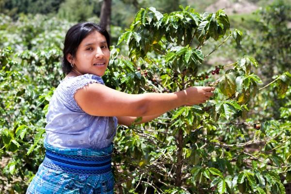 kaffee-costa-rica