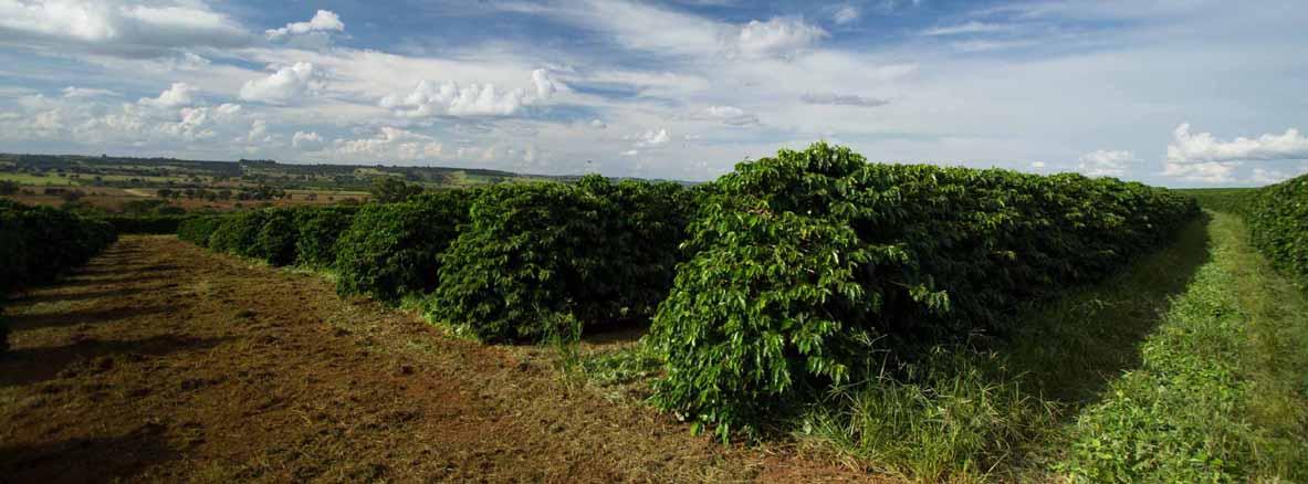 Plantage-Ismael-Andrade-Brasilien