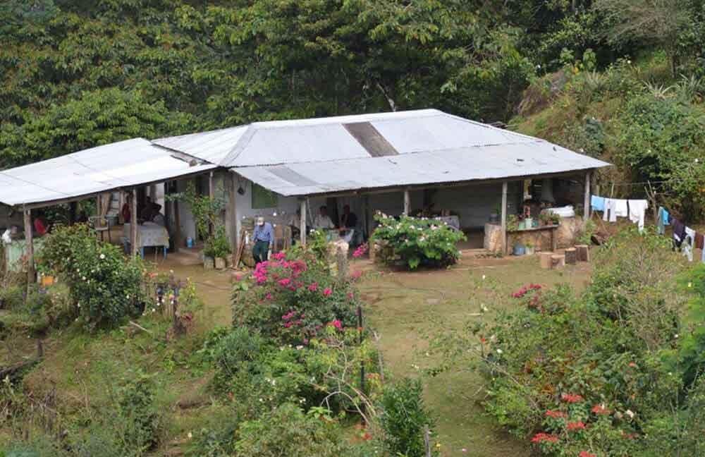 Kaffee-kaufen-Plantage-Mexiko