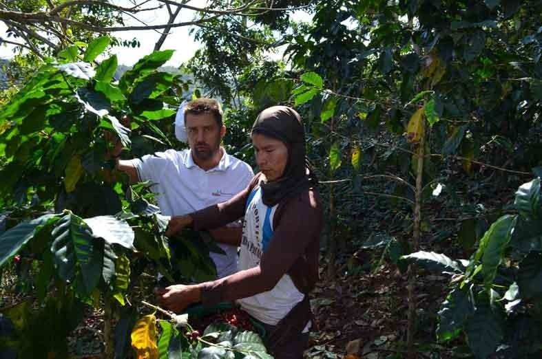 Bio Kaffee Pachamama kaufen