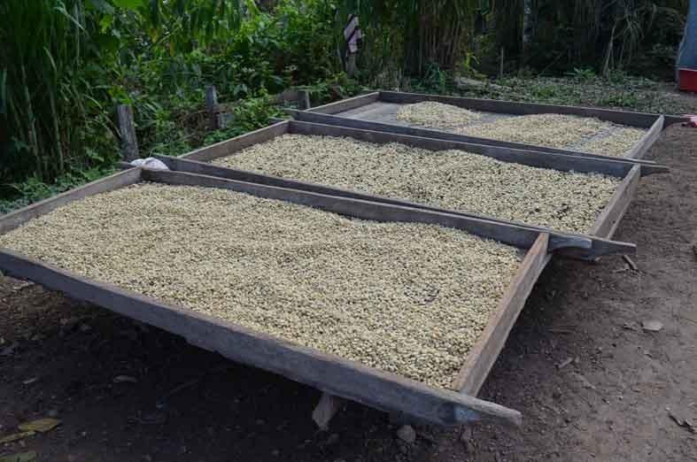 https://www.martermuehle.de/media/image/b9/7e/01/PachaMama-Kaffee-trochnet-in-Peru.jpg