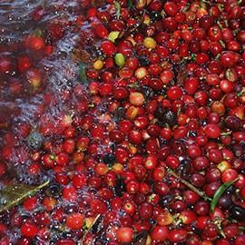 Bio Kaffee Honduras kaufen