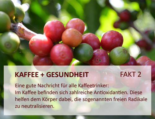 kaffee-und-gesundheit_Antioxidantien